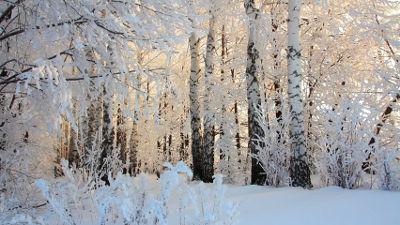П.И. Чайковский Симфония №1 «Зимние грёзы»